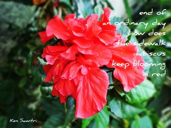 Ken Sawitri_DailyHaiga_in red